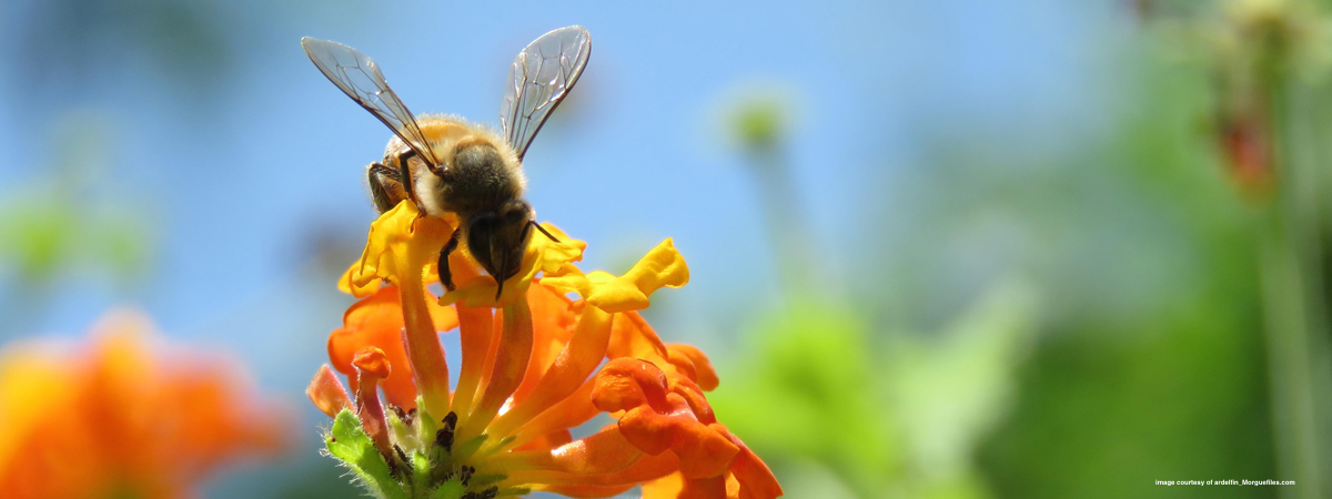Sharing the Healing Potential of Bee Propolis