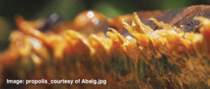 propolis_courtesy of Abalg_rotate