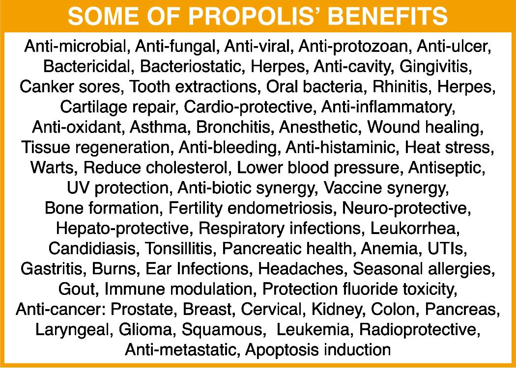 Image result for Propolis